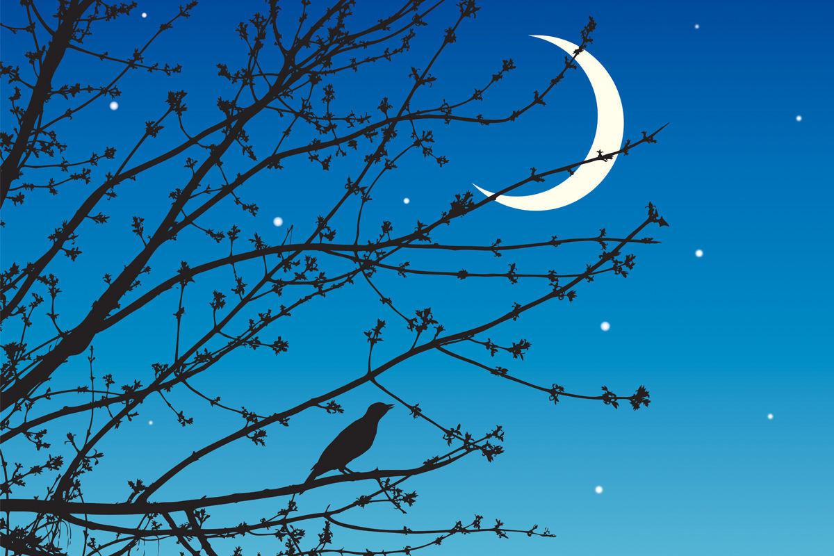 Obrázek Noční Junior, Rádio pro nespavé živočichy.
